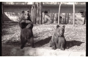 Giulietta e Romeo, due famosi orsi del Centro visita (foto PNALM)