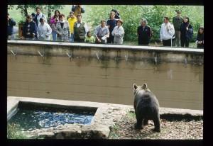 L'orso Sandrino nel Centro visita. A guardarlo ci sono la moglie dell'ex Capo dello Stato italiano Sandro Pertini con accanto l'ex direttore del Parco, Franco Tassi (foto PNALM)