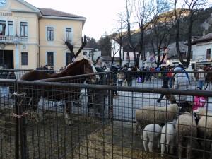 animali esposti in piazza per la festa di Sant'Antonio abate